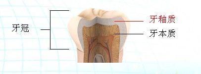 牙釉质.jpg